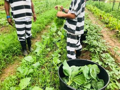 inmates in garden color